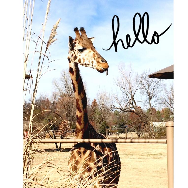 Hello Giraffe.jpeg