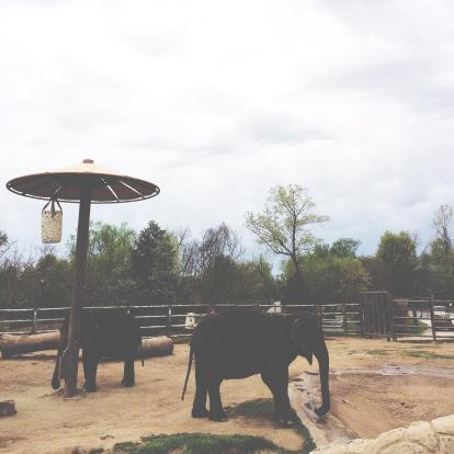 Tulsa Zoo last Spring