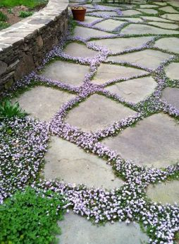 sweet-garden-path-ground-cover